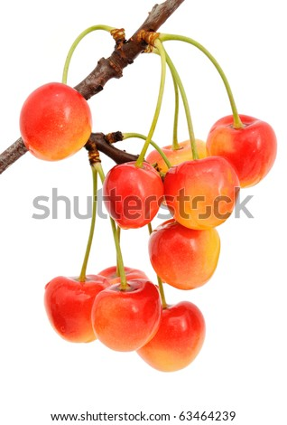 Sweet cherry on the branch with leaves on a white background