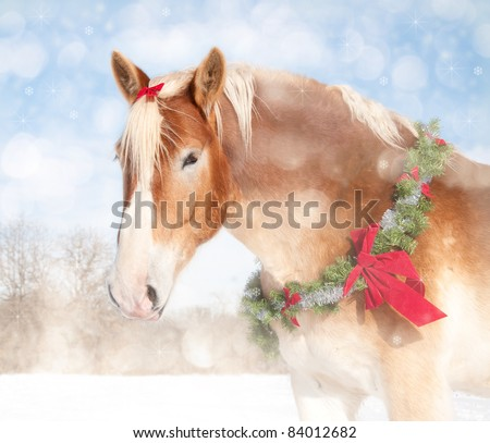 Stock Photo Sweet Christmas themed image of a Belgian draft horse with a wreath and bow