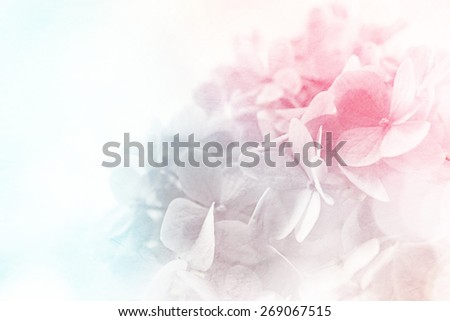sweet color flowers in soft color and blur style on mulberry paper texture