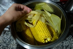 Sweet corn boil with corn leaves and salt. cooked or boiled sweet corns in pot. Healthy snacks.