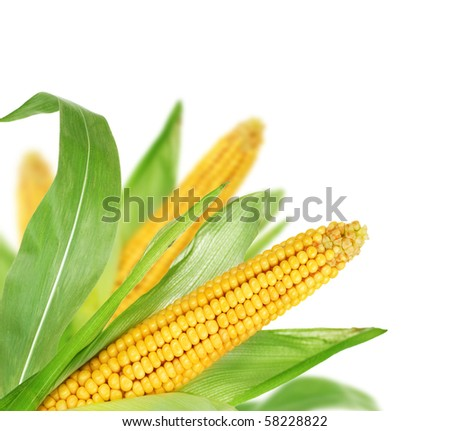 Sweet Corn border