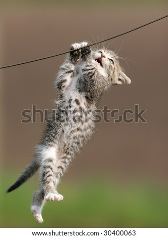 sweet cute little kitty hanging clear of the ground on a nails only