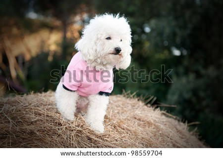 Sweet dog dressed in pink on a bale of hay