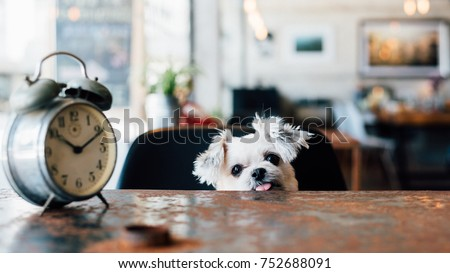 sweet dog so cute mixed breed...