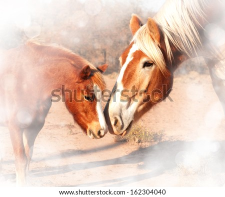 Stock Photo Sweet, dreamy image of a small pony and a huge draft horse sniffing noses; friendship without limits