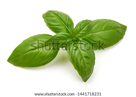 Sweet Green Basil Leaves, Herb, Spice, close-up, isolated on white background. Foto d'archivio ©