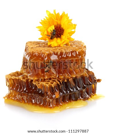 sweet honeycomb with honey, bee and flower, isolated on white
