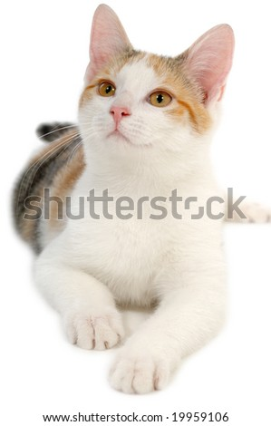 Sweet kat on a clean white background