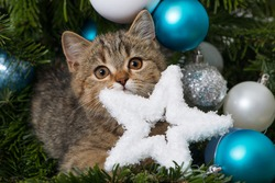 Sweet kitten in a christmas tree