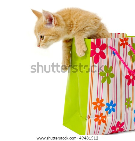 Sweet kitten is sitting in a shopping bag.