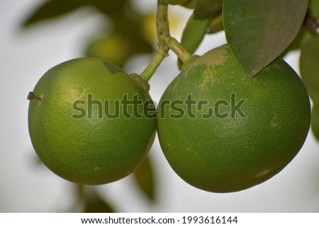 sweet lime is fruit good for health.