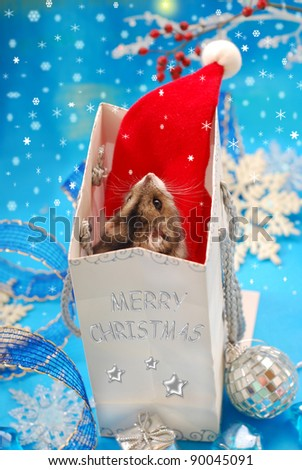 sweet little hamster  in paper gift bag looking at the  first star and waiting for christmas