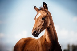 sweet little horse foal outdoors in the sunshine