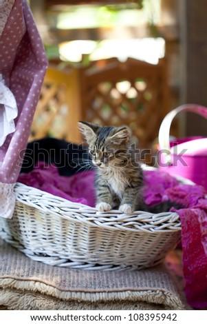Sweet little kitty in a basket