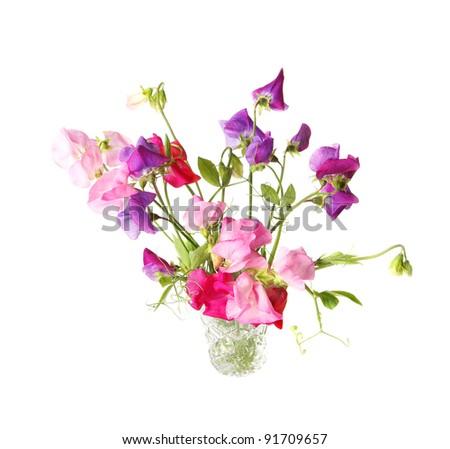 Sweet pea, Lathyrus odoratus, flowers in a crystal vase.