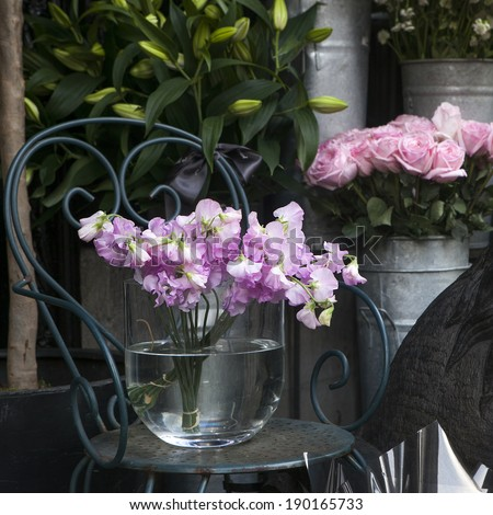 Sweet pea, Lathyrus odoratus, flowers in a crystal vase standing on cast-iron chair.