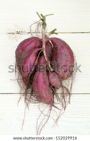 sweet potato plant with tubers on wood table