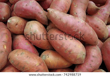Sweet potatoes piled for market #742988719