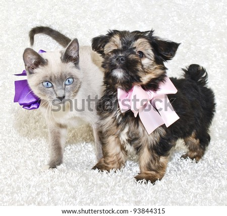 Sweet puppy and kitten wearing pretty bows on a white background.
