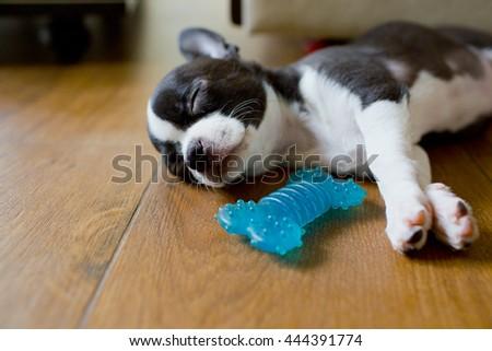Sweet puppy sleep on the floor #444391774