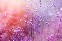 sweet purple background of grass flower with sunlight, romance background for graphic design