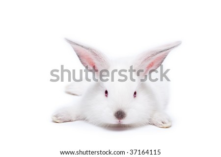 Sweet white little easter bunnies isolated on white