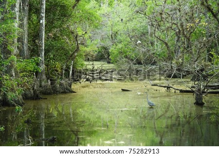 Sweetwater Strand, Big Cypress National Preserve, Florida Everglades