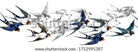 Swift bird seamless pattern. border with swallow watercolor illustration.  Foto stock ©