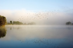 Swifts above water. Flock of birds flying over river in morning mist. Beautiful summer rural landscape. Foggy mystical weather