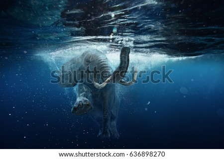 Swimming African Elephant Underwater. Big elephant in ocean with air bubbles and reflections on water surface.