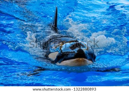 swimming in sea, beautiful photo digital picture