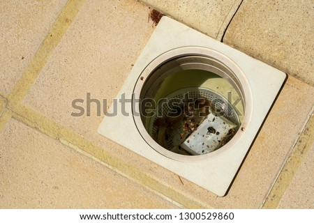 Swimming pool maintenance - a skimmer basket ful of debris and dead insects #1300529860