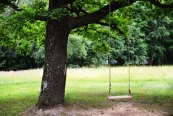 swing hanging on old oak tree