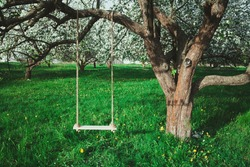 Swing on a tree in a lush garden