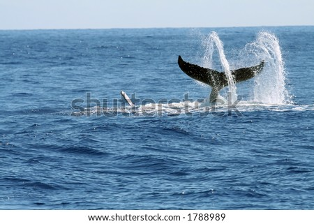 swirling whale tail with water spray