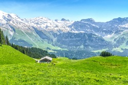Swiss Alps. Ranch and pasture for cattle. Engelberg Resort