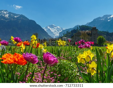 Swiss Alps Valley with Flowers in Interlaken, Switzerland
