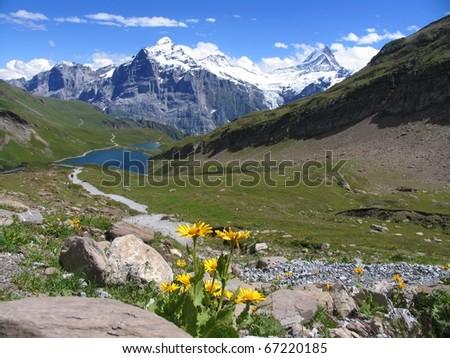 Swiss beauty, flowers view to Wetterhorn above Bachalpsee