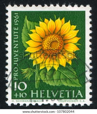 SWITZERLAND - CIRCA 1961: stamp printed by Switzerland, shows flower Sunflower, circa 1961.