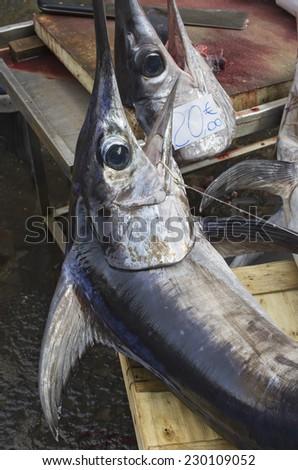 Swordfish:. photo taken at the main fish market (a street, open air market) in Catania, Sicily, Italy.