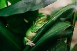 Sydney, Australia. Frog in the Zoo.