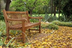 Sydney Australia, garden bench under a ficus virens tree with ground covered with yellow leaves