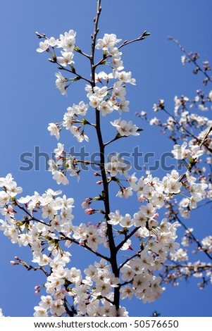 Japanese Sky Symbol