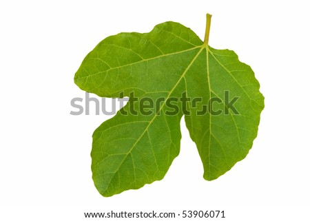 Symbolic fig leaf, isolated over white.
