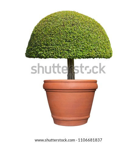 symmetric curved mushroom shape ...