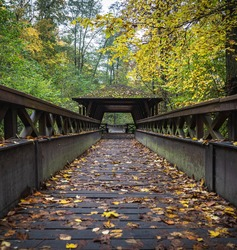 Symmetric lines of the wooden bridge in the autumn forest. Yellow leaves on the brigde.