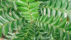 symmetrical arrangement of green leaves.