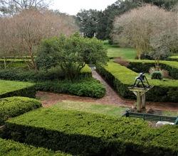 Symmetrical landscaped trimmed  boxwood hedges