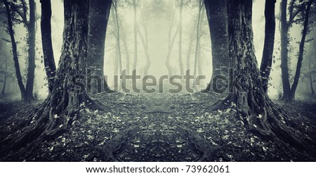 symmetrical photo of a secret passage in a dark mysterious forest with fog