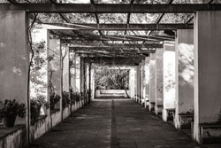 Symmetrical view of the passageway of a romantic style garden covered by an old pergola in black and white